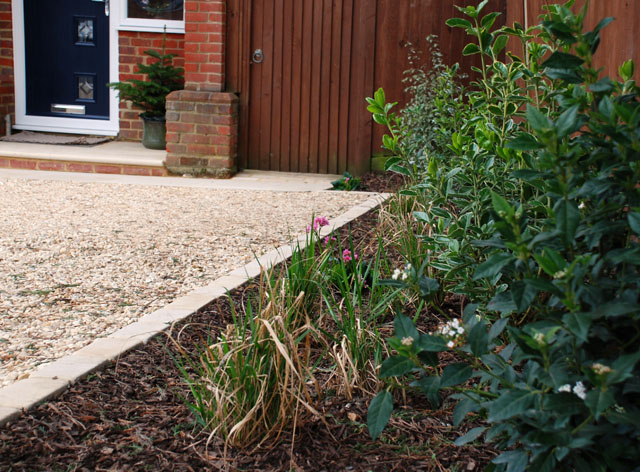Front garden in Sutton after planting Lisa Cox Designs