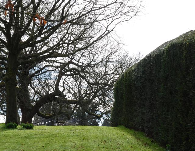 RHS Garden Wisley Lisa Cox Garden Designs