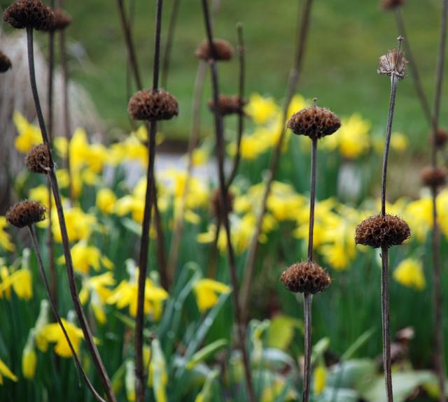 RHS Garden Wisley by Lisa Cox Designs