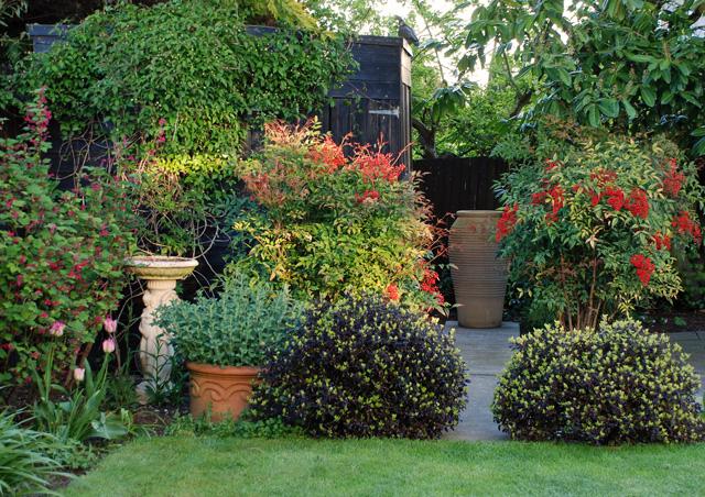 Back garden ideas | Lisa Cox Garden Designs Blog on Back Garden Ideas id=70754