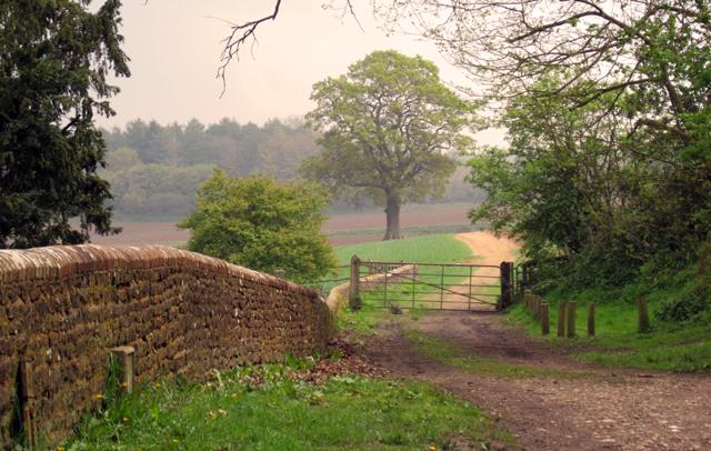 Majestic oak tree in Surrey hills Lisa Cox Garden Designs
