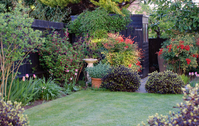 Back garden ideas lisa cox garden designs blog for Small patio landscaping