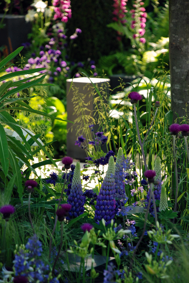 Lupins in Help for Heroes garden RHS Chelsea 2014 Lisa Cox