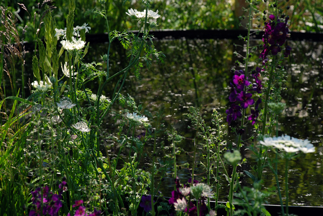Planting & water The Night Sky Garden Chelsea 2014 Lisa Cox