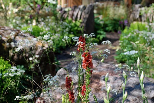 Vital Earth The Night Sky Garden RHS Cheslea Flower Show 2014 Lisa Cox