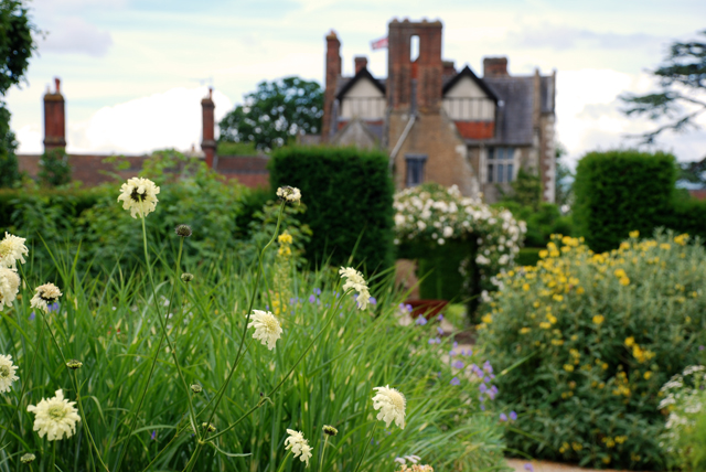 Cephalaria gigantea Lisa Cox Garden Designs Loseley Park