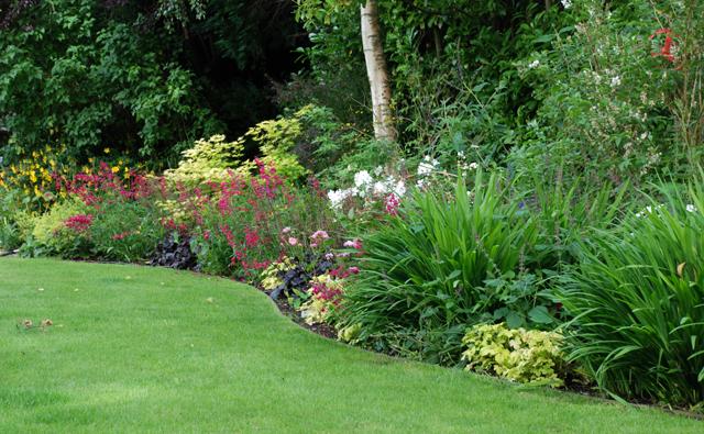 Oxshott planting Lisa Cox Garden Designs
