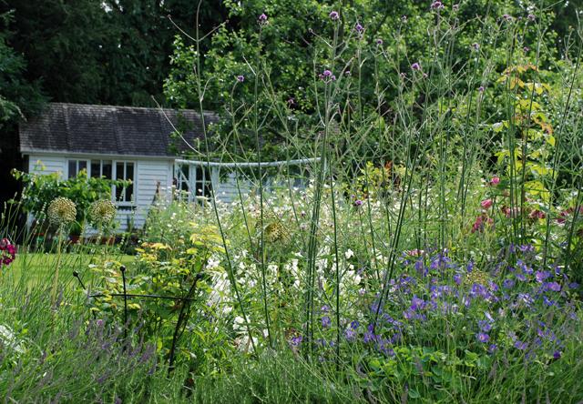 Oxshott planting back garden Lisa Cox Designs