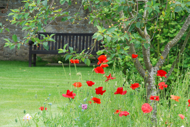 Poppies in the vegetable garden at Loseley Park Lisa Cox Designs