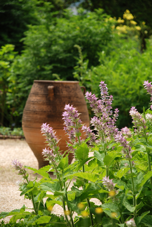 Terracotta urn in Herb Garden at Loseley Park Lisa Cox Designs