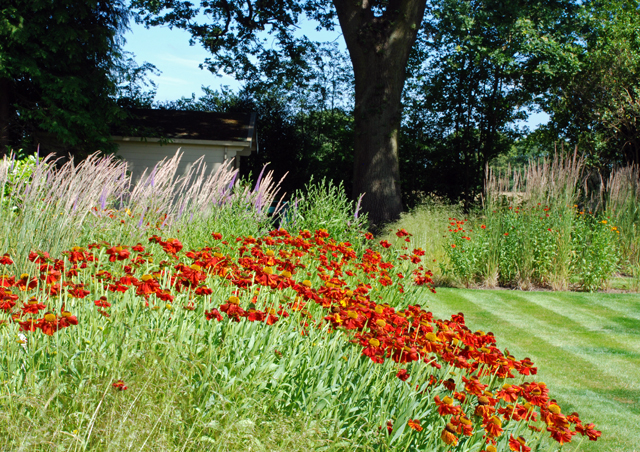 Helenium & calamgrostis Lisa Cox Garden Designs