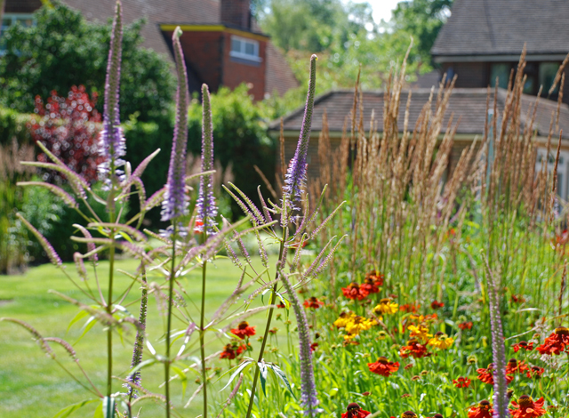 Veronicastrum & Helenium Lisa Cox Garden Designs
