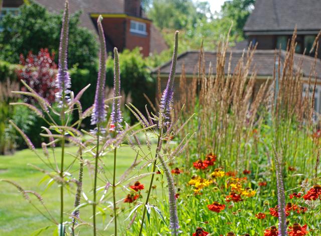 Veronicastrum & Helenium Lisa Cox Garden Designs