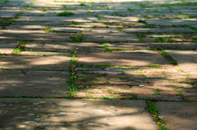 Shady paving at Glyndebourne Lisa Cox Garden Designs - Copy