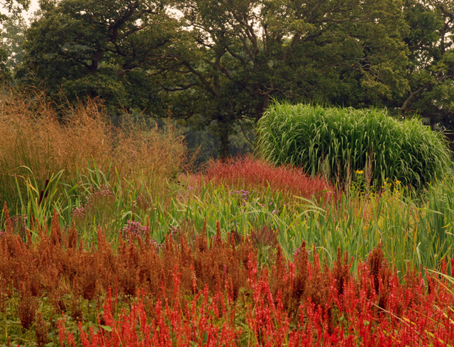 Autumn planting at Sussex Prairies Lisa Cox Garden Designs