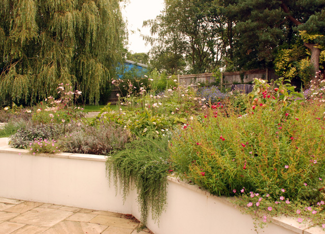 Cottage planting in Leatherhead garden Lisa Cox Designs