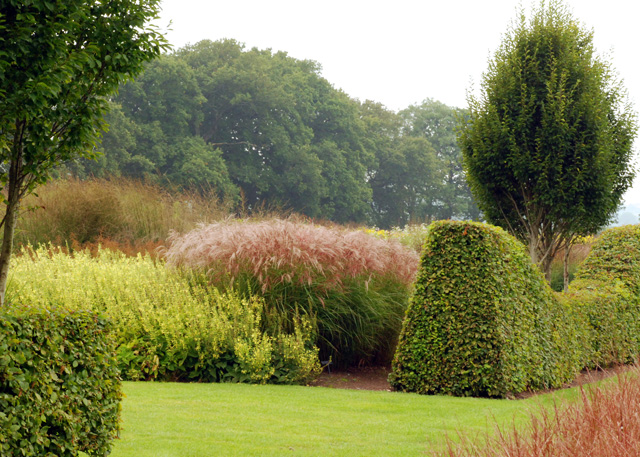 Miscanthus at Sussex Prairies Lisa Cox Garden Designs