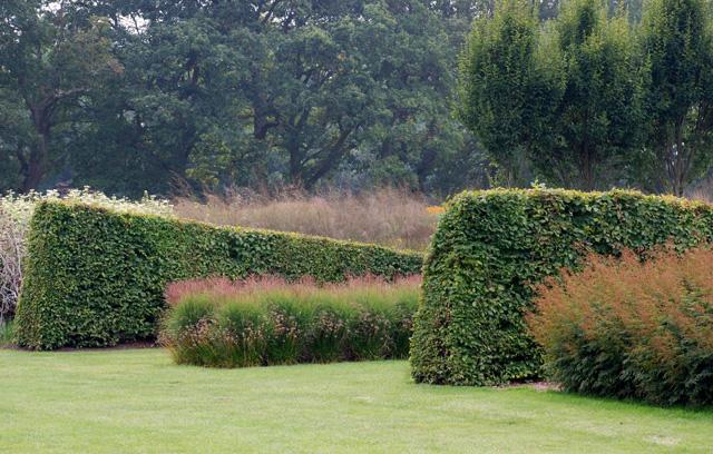 Sculpted hedges at Sussex Prairies Lisa Cox Garden Designs