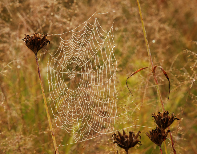 Spider's web Lisa Cox Garden Designs