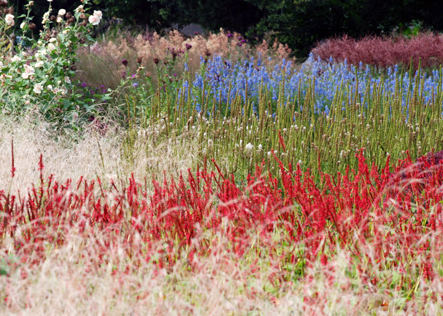 Sussex Prairies in September Lisa Cox Garden Designs