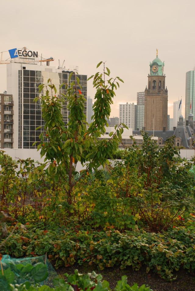 DakAkker Roof Garden in Rotterdam Lisa Cox Designs