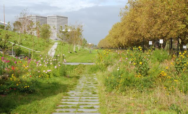DakPark in Rotterdam Lisa Cox Garden Designs