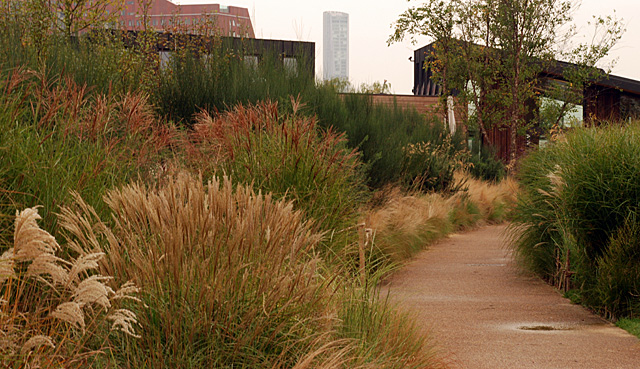 Queen Elizabeth Olympic Park Lisa Cox Garden Designs