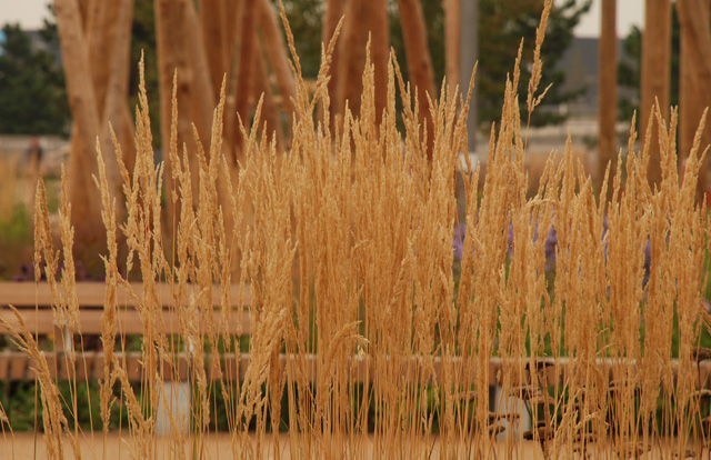 Queen Elizabeth Olympic Park London Lisa Cox Garden Designs