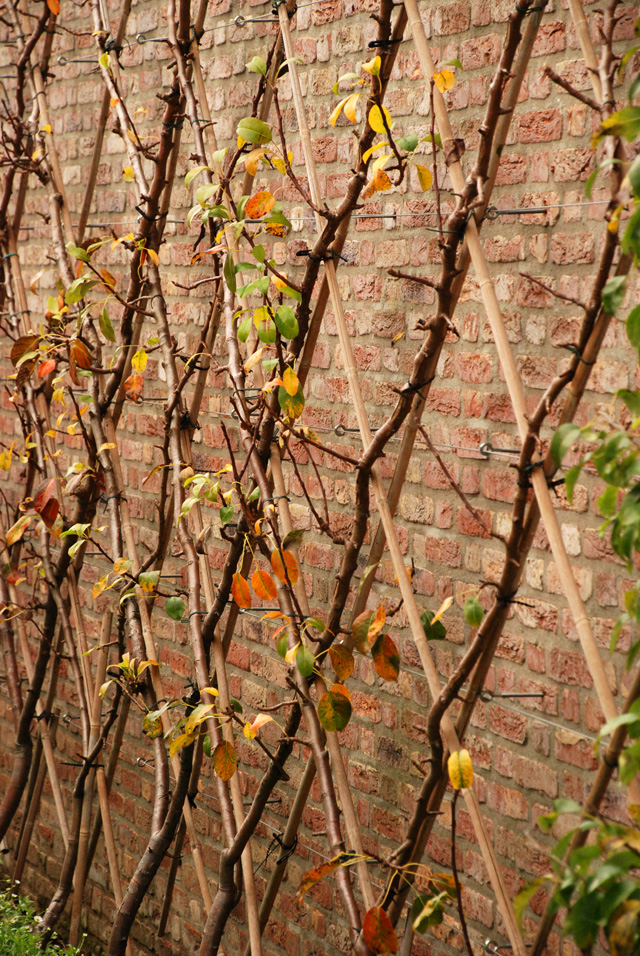 Wall of fruit Hotel Villa Augustus Lisa Cox Garden Designs