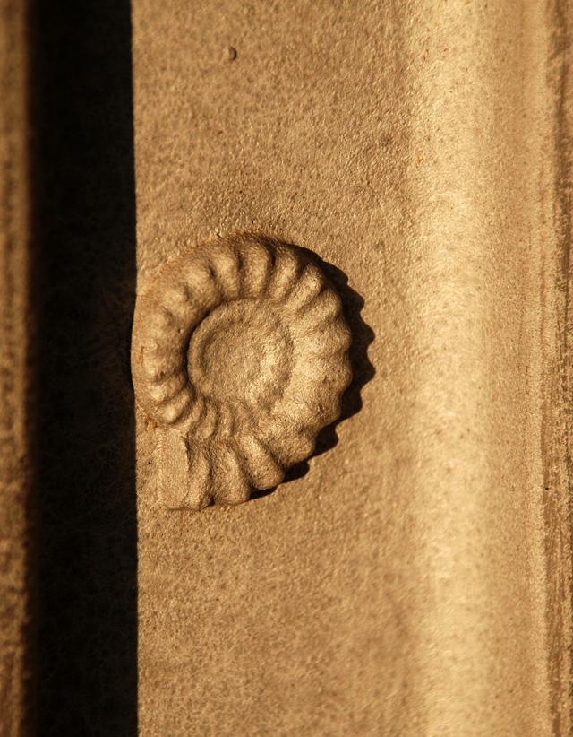 Ammonite detail on metal fencing Lisa Cox Garden Designs