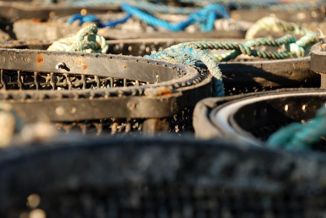 Lobster Pots in Lyme Regis Lisa Cox Garden Designs