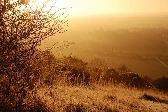 View from Box Hill Winter dawn Lisa Cox Garden Designs