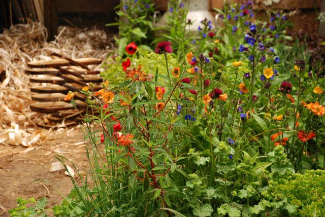 A Trug maker's garden RHS Chelsea 2015 Lisa Cox