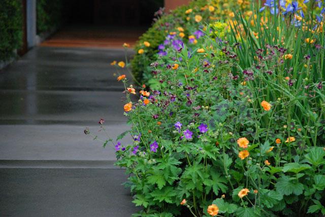 Planting in Homebase garden RHS Chelsea 2015 Lisa Cox