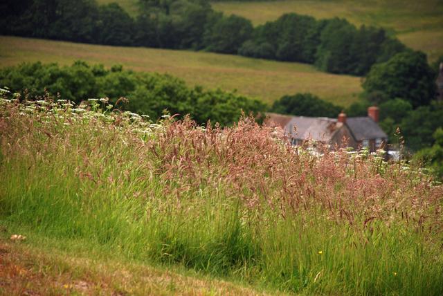 Wild grasses Kilgwrrwg Lisa Cox