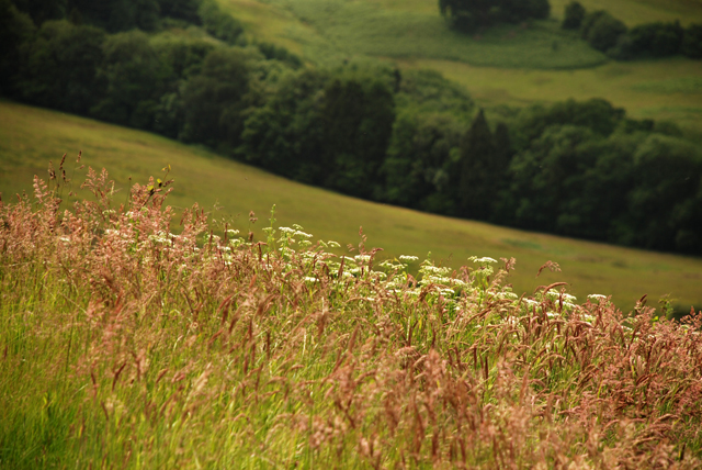Wild grasses in Monmouthshire Lisa Cox