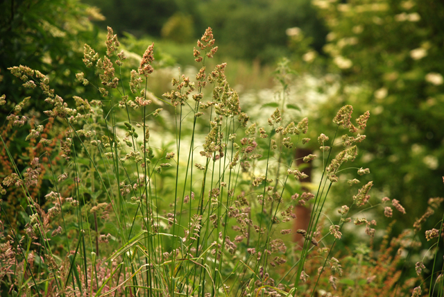 Wild grasses in flower Lisa Cox Garden Designs