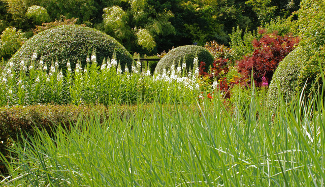 Front garden at Veddw Lisa Cox Designs