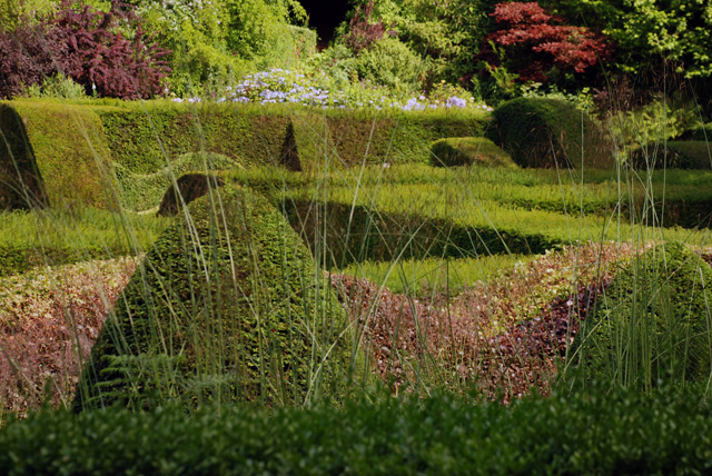 Sculptural hedges at Veddw Garden Lisa Cox Designs