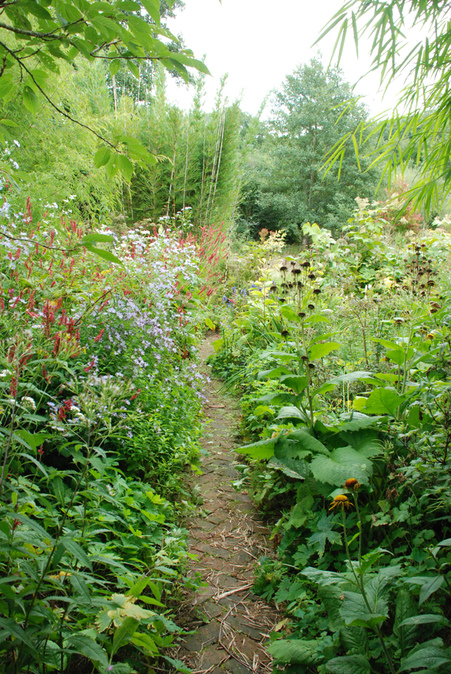 Big border and wild garden at Montpelier Cottage Lisa Cox Designs