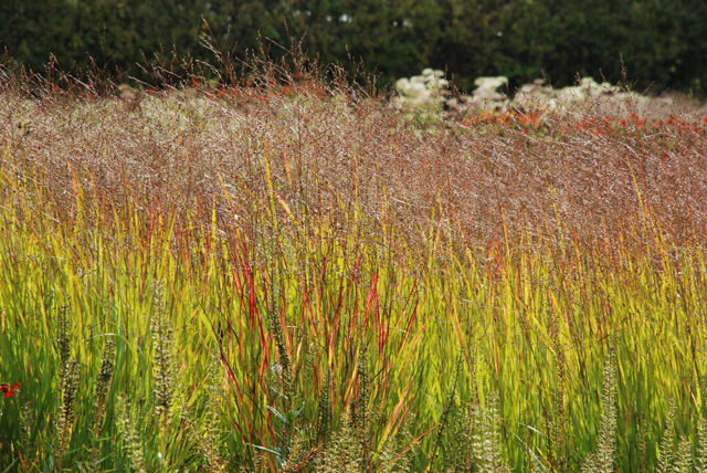 Autumn grasses Hauser Wirth Bruton Lisa Cox Garden Designs
