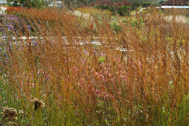 Autumn grasses at Hauser Wirth Lisa Cox Garden Designs