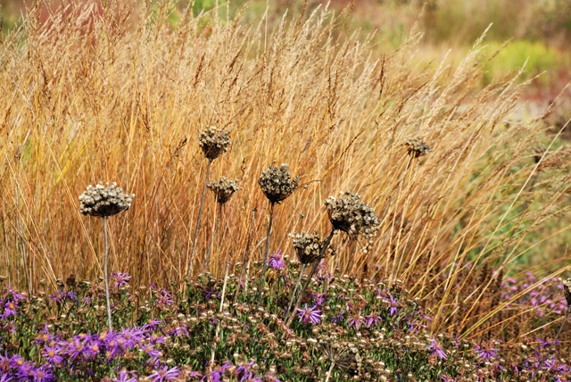 Seed heads and autumn grass Lisa Cox Garden Designs