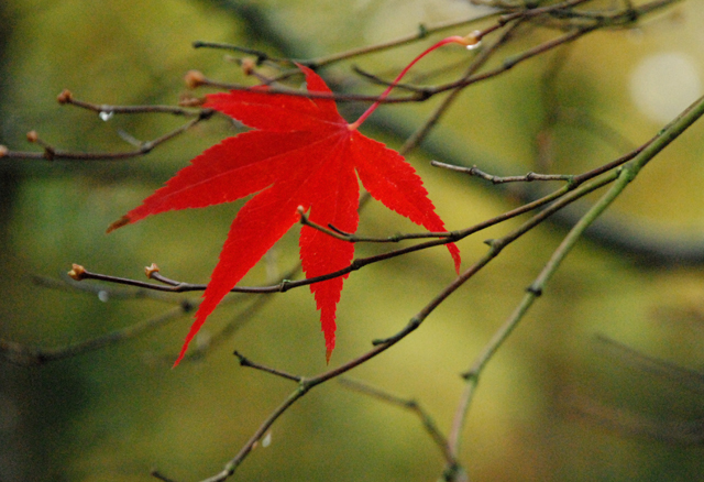Last leaf standing Lisa Cox