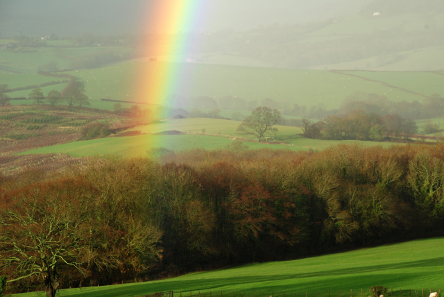 Pot of gold in Kilgwrrwg valley Lisa Cox Garden Designs
