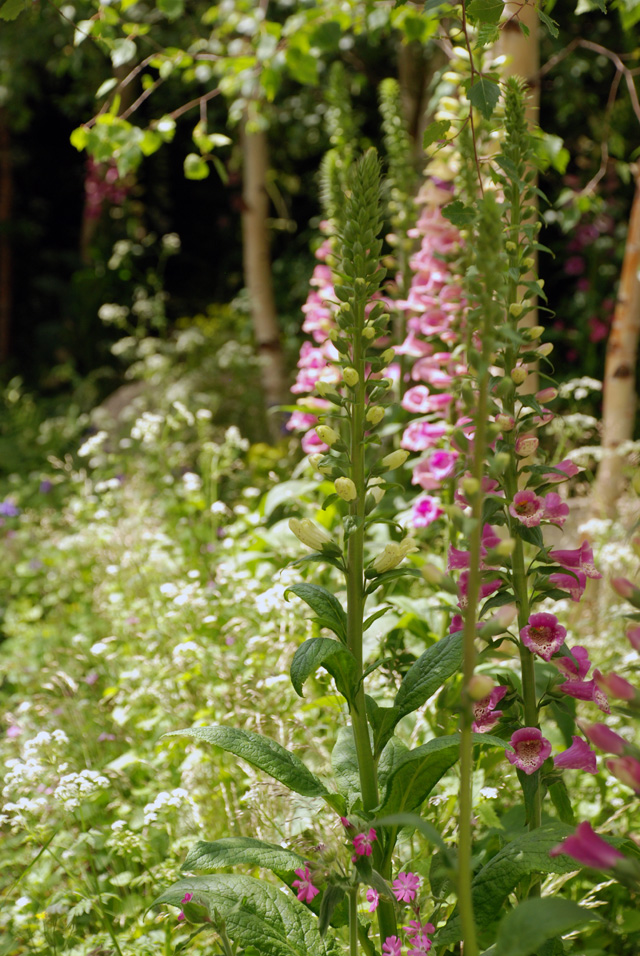 Hartley Botanic Garden RHS Chelsea 2016 Lisa Cox