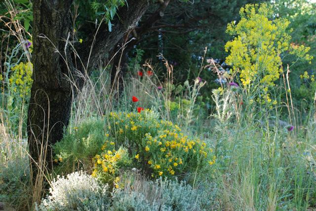 James Basson's wild planting Chelsea 2016 Lisa Cox
