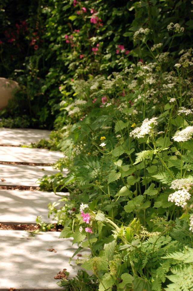 Pathway in Hartley Botanic Garden RHS Chelsea 2016 Lisa Cox