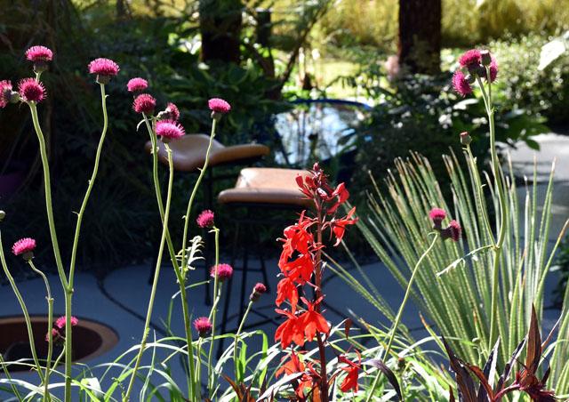 Planting in Bowel Disease Garden RHS Hampton Court 2016 Lisa Cox