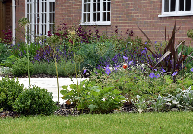 Planting in Weybridge garden 9 months on Lisa Cox Designs